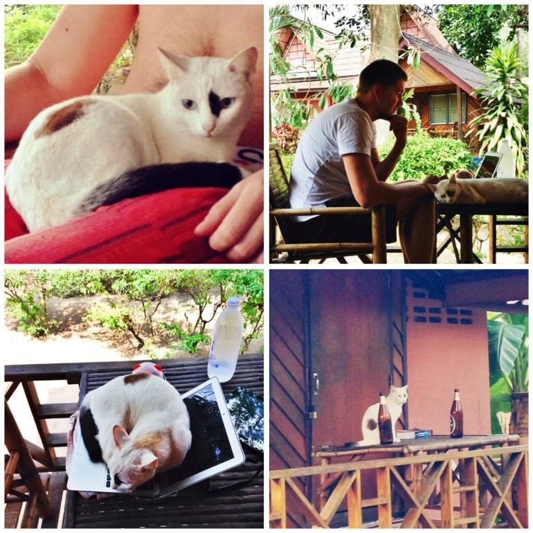 Our Thai kitty, Toof.