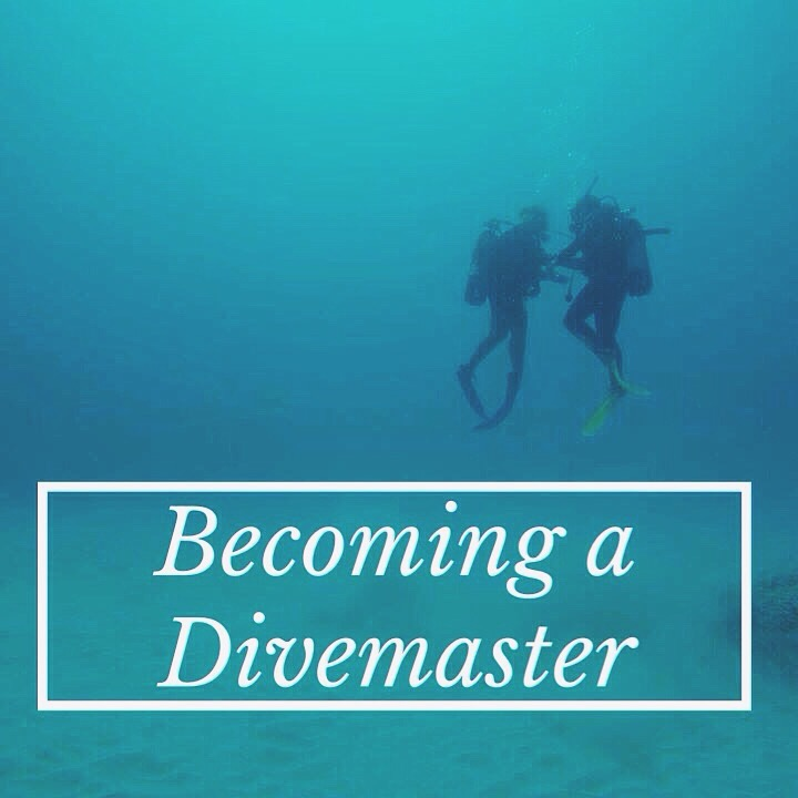 Becoming A Divemaster A Short Story On Fear